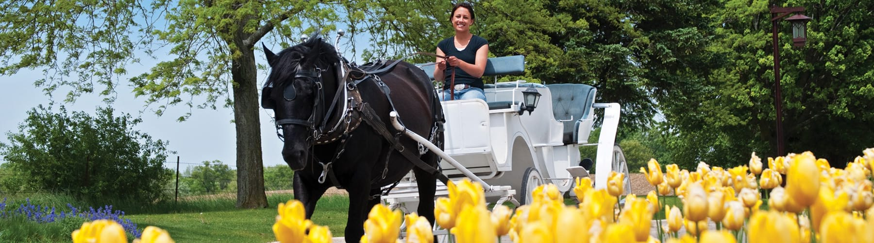 Spring Carriage Ride