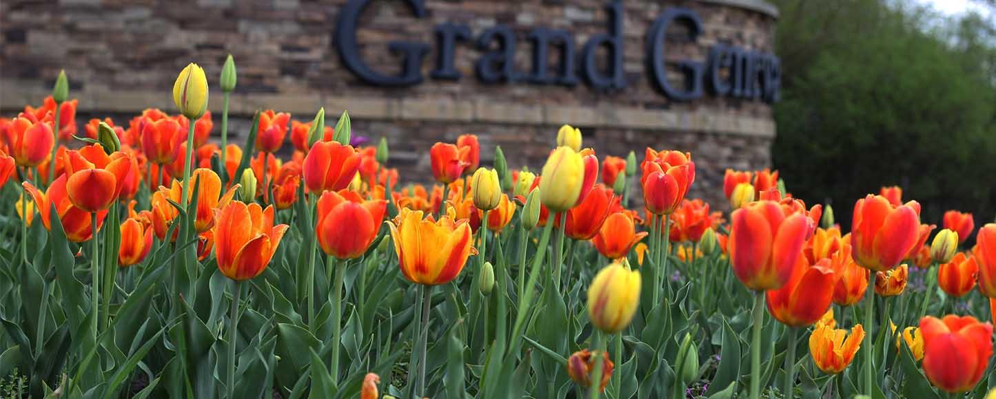 Tulips at Grand Geneva
