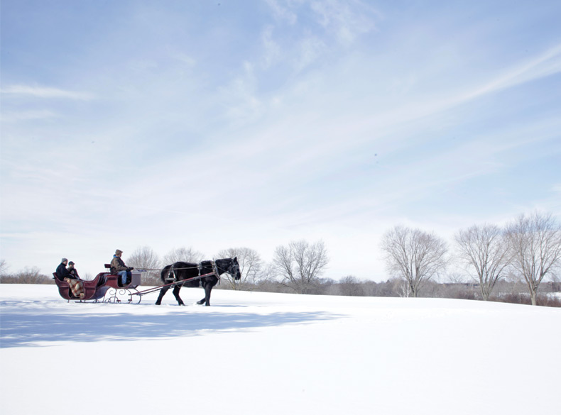 Horse Drawn Carriage in Winter